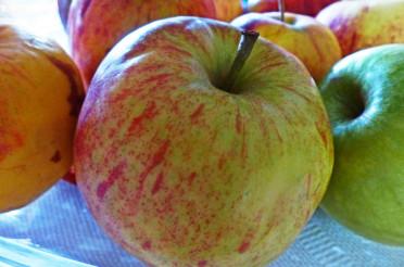 Auf dem Tisch die bunten Äpfel