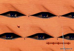 Fenster wie Augen