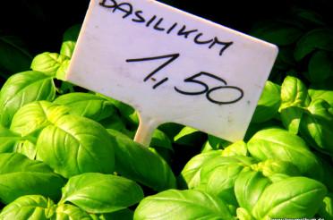 Basilikum – Es riecht nach Sommer und Italien