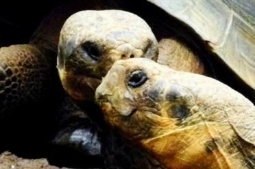Ein Plausch unter Schildkröten im Loro Parque