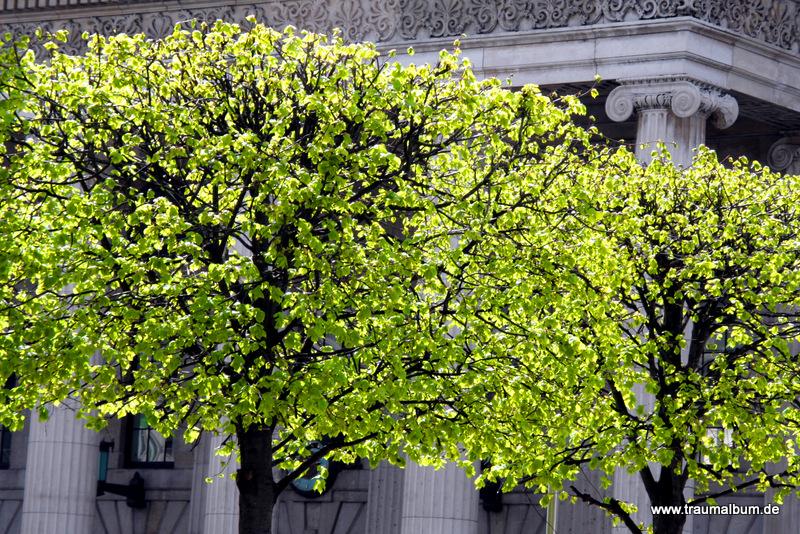 Grüne Bäume in Dublin