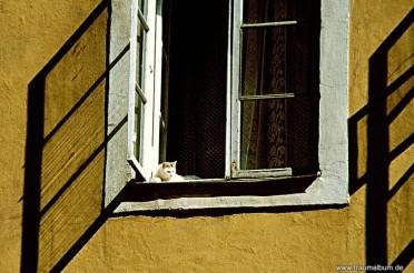 Fenster mit Katze mit Platz an der Sonne