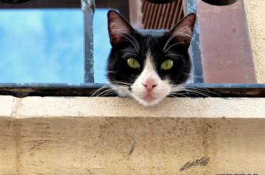 Alles für die Katz – Katzenfoto für Kalle