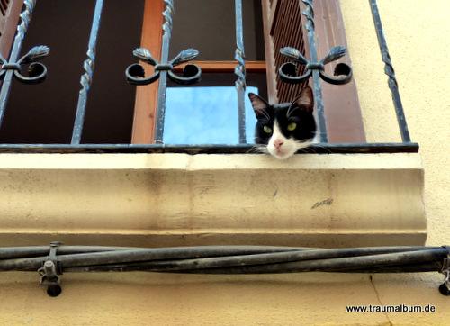 Katzenfoto