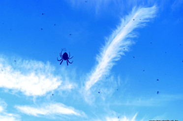 Spinne am Himmel – Spider in the Sky