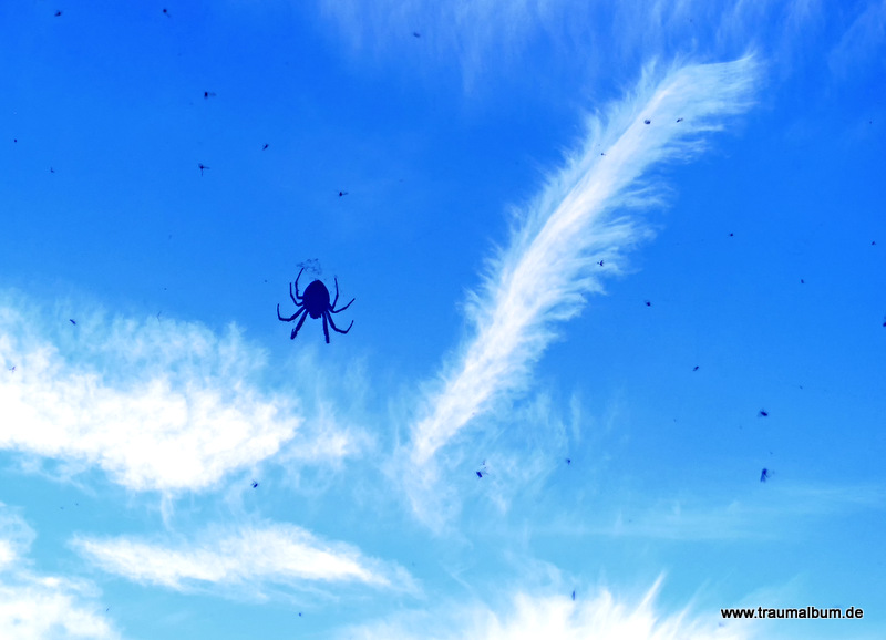 Spinne am Himmel
