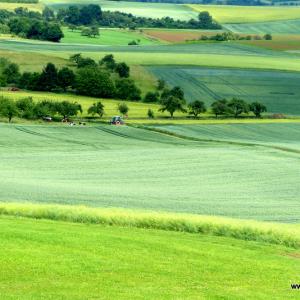 Felder und Weiden