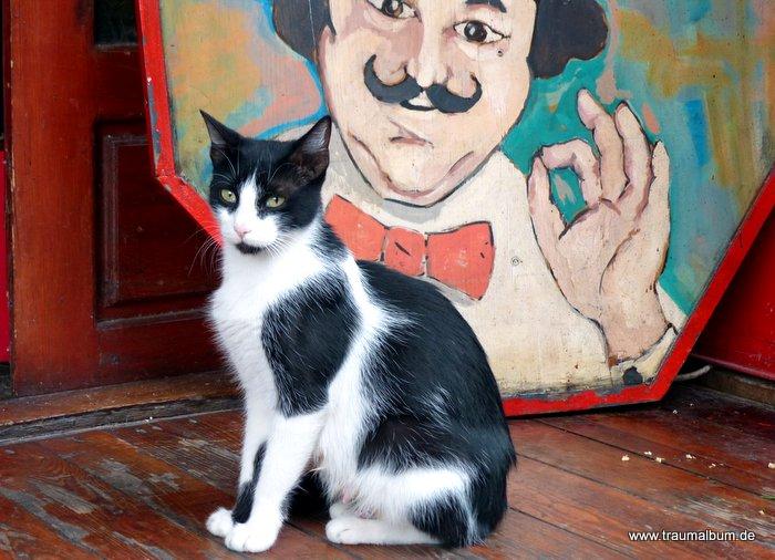 Katze und Koch für die Fotoaktion: Alles für die Katz