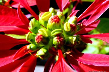 Ein Weihnachtsstern und das Kreative Sonntagsrätsel #6
