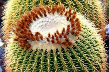 Mein kleiner runder Kaktus – Dienstags geht es rund #6