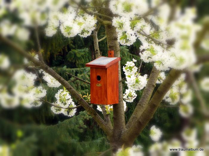 """Frühling – Das einzig logische Thema für Magic Letters """"F"""""""