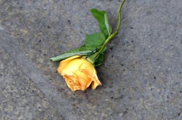 Eine gelbe Rose und das Kreative Sonntagsrätsel #34