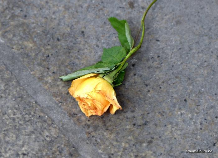gelbe rose - Eine gelbe Rose und das Kreative Sonntagsrätsel #34