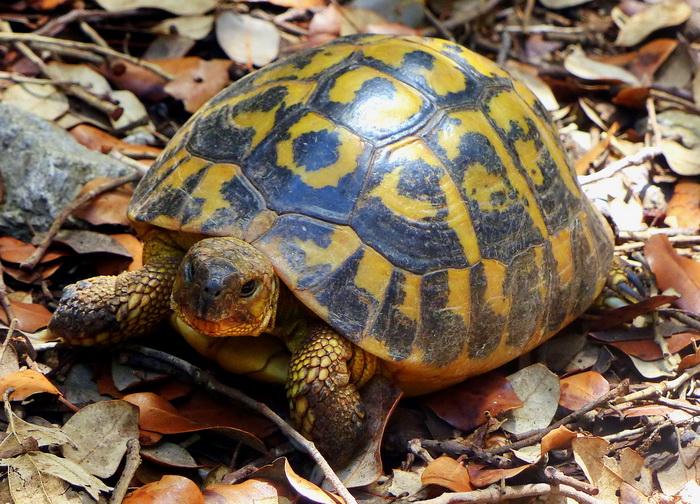 Grinsende Schildkröte und das Kreative Sonntagsrätsel #41