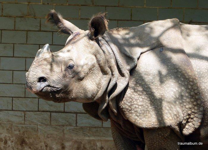 Ein Nashorn beim Kreativen Sonntagsrätsel #51