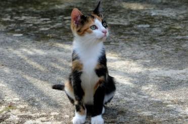 Catcontent – Süße Katzenfotos aus Kroatien #PPP10