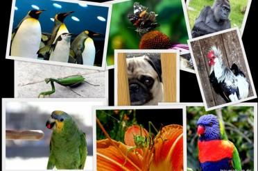 Tipps und Tricks für gelungene Tierfotos