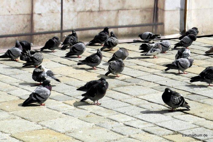 Angst vor Tauben - Angst essen Seele auf - Thema der Woche bei #PPP26