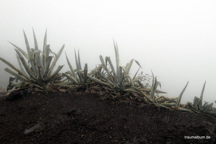 Eingang zur Unterwelt – Gruseliges und Geheimnisvolles bei PPP#31