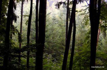 Bilder aus dem Wald für die Blogaktion PPP#43