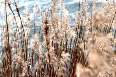 Stillleben oder still Leben im Winter für 12 Magische Mottos