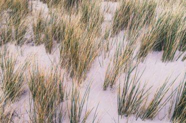 Die Dünenlandschaft auf Amrum – Der Natur-Donnerstag (DND)